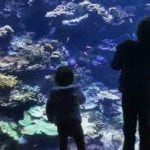 The California Academy of Sciences- Ultimate Guide from a Local Mama