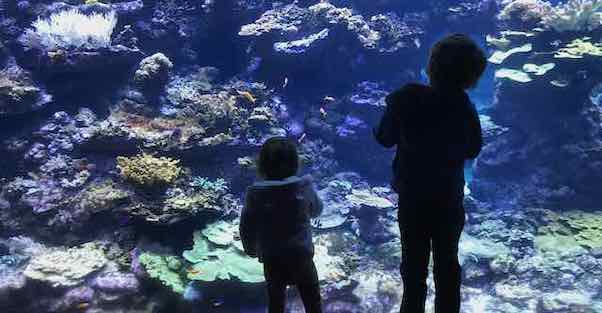 kids looking at aquarium at the academy of sciences
