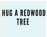 Hug a redwood tree bingo square for things to do in san francsico with kids bingo challenge